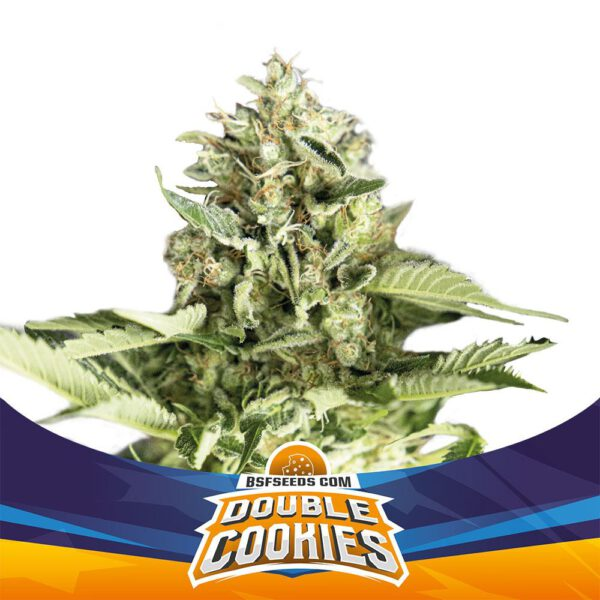 BSF Seeds - Double Cookies - Semillas Auto (X2)