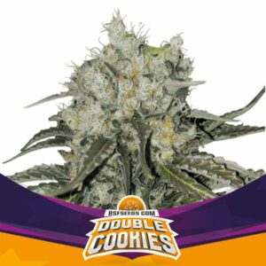 BSF - Double Cookies - Semillas Fem (x2)
