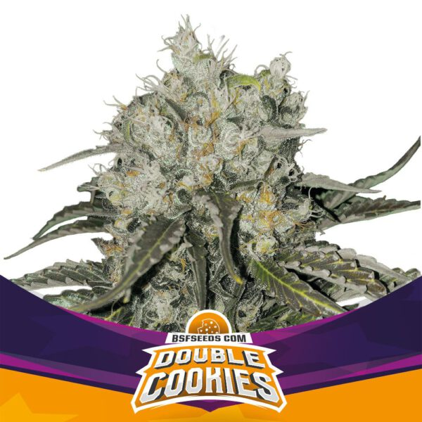BSF Seeds - Double Cookies - Semillas Fem (x2)