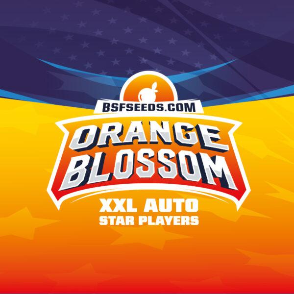 BSF Seeds - Orange Blossom XXL - Semilla Auto (x2)