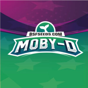 BSF Seeds - Moby-D - Semillas Feminizadas (x2)