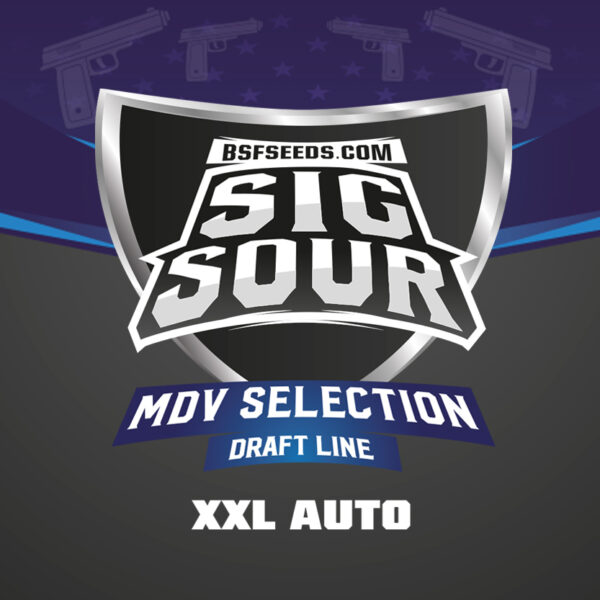 Semillas - BSF Seeds - Sig Sour XXL Auto (x2)